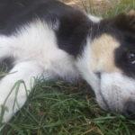 Puppy Vesna